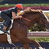 Storm Runner - Gulfstream Park, March 24, 2018<br /> Coglianese Photos