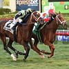 Shining Copper wins the 2018 Ft. Lauderdale Stakes<br /> Coglianese Photos/Lauren King