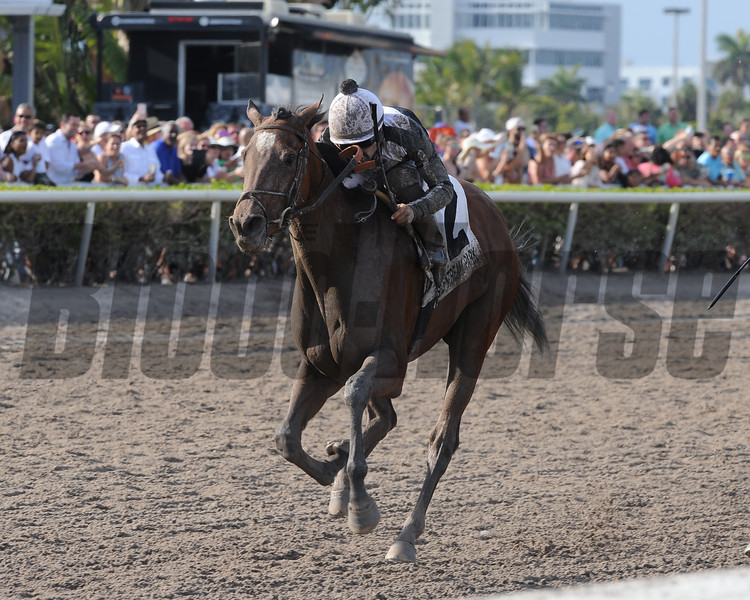 Coach Rocks wins the 2018 Gulfstream Park Oaks<br /> Coglianese Photos/Kenny Martin