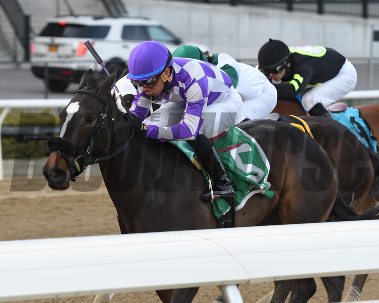 Baby Boss wins the 2018 New York Stallion Stakes<br /> Coglianese Photos/Annette Jasko