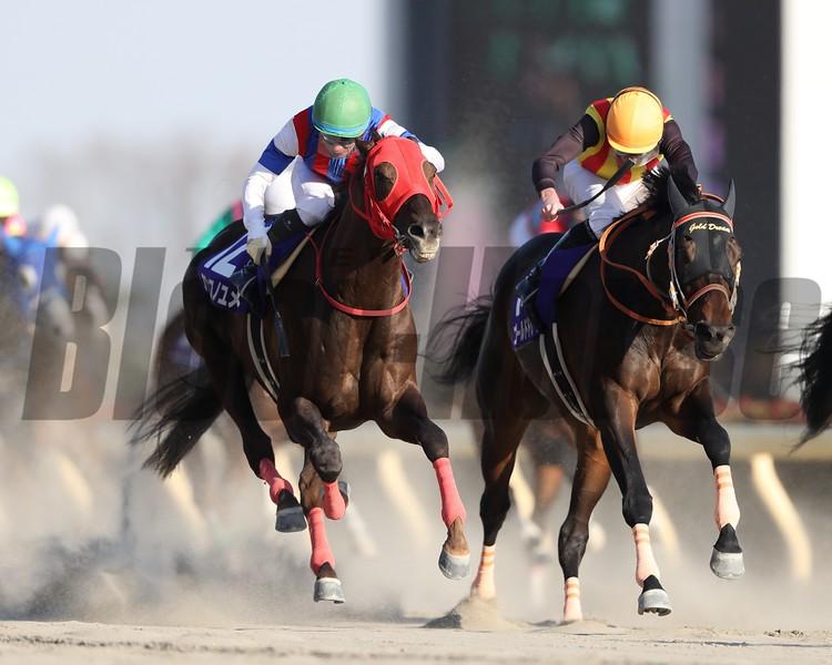 Nonkono Yume (JPN); February Stakes; Tokyo Racecourse; February 18 2018