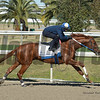 Winchell Thoroughbreds LLC's Grade I Breeders' Cup Classic Gun Runner worked at the Fair Grounds Race Course & Slots one final time on Sunday, January 14 before the first race. Trained by Steve Asmussen, Gun Runner is a finalist for 2017 Horse Of The Year. He is scheduled to ship on Thursday, Jan. 18 for Gulfstream Park where he will make the final start of his career in the $16 million Pegasus World Cup, Gr1, on Jan. 27. Following the Pegasus World Cup, he will assume stallion duties at Three Chimneys Farm in Lexington, Ky. where he will carry a $70,000 stud fee. <br /> Photo by Alexander Barkoff