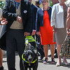 Seeing eye dog, Zoey, Royal Ascot; Ascot Race Course; Ascot; UK; 6-21-18; Photo by Mathea Kelley