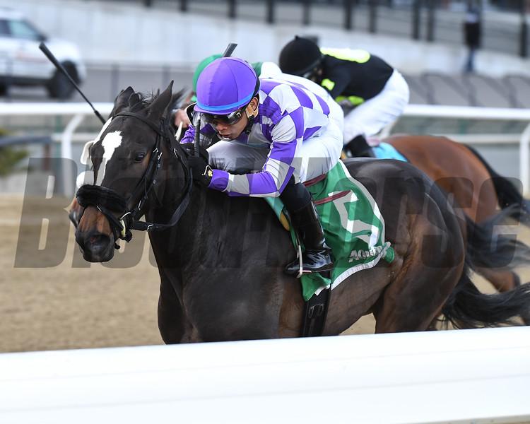 Baby Boss wins the 2018 New York Stallion Stakes<br /> Coglianese Photos/Joe Labozzetta