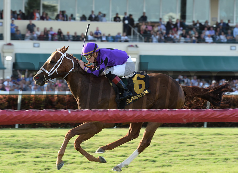 Rainbow Heir wins the 2018 Gulfstream Park Turf Sprint Stakes<br /> Coglianese Photos/Lauren King