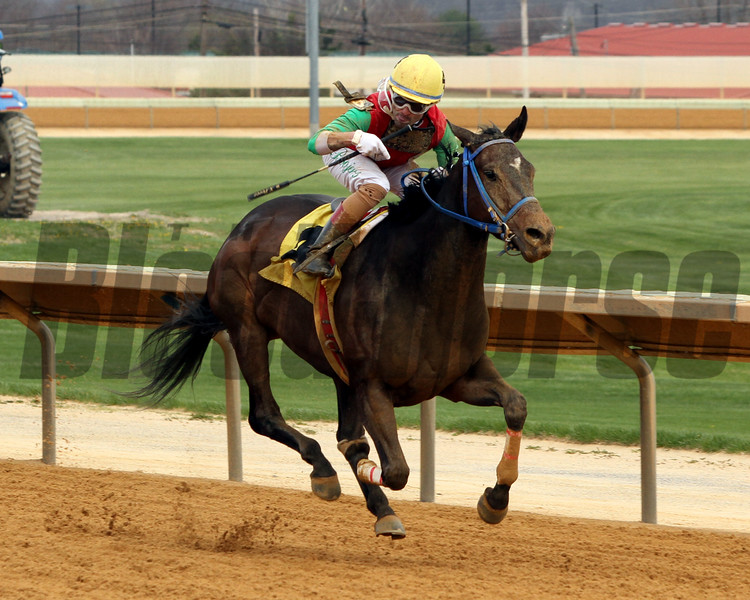 Anna's Bandit Down Town Allen Overnight Stakes