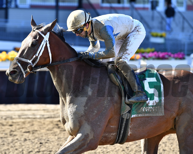 Helooksthepart wins the 2018 Caixa Eletronica Stakes<br /> Coglianese Photos/Joe Labozzetta