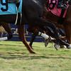 2018 Florida Derby Day<br /> Coglianese Photos