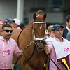 Monomoy Girl before the Longines Kentucky Oaks at Churchill Downs on May 4, 2018.