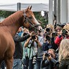 Justify - Morning - Belmont Park - 06-10-18 <br /> © Rick Samuels/The Blood-Horse