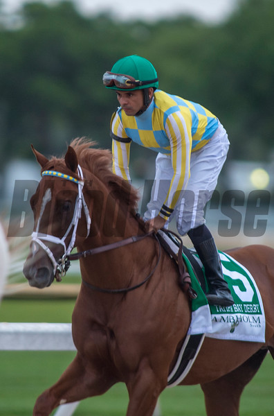 Flameaway finished second in TheLambholm South  Tampa Bay Derby  . @ Tampa Bay Downs. March10 2018<br /> © Joe DiOrio/Winningimages.biz