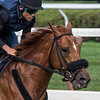 Mind Your Biscuits under regular jockey Joel Rosario worked a half mile Friday July 27, 2018, in preparation for next Saturday's Whitney Stakes at the Saratoga Race Course Main track in Saratoga Springs, N.Y.  Photo by Skip Dickstein