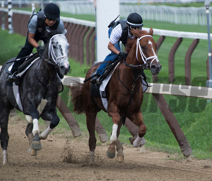 Vino Rosso with jockey John Velazquez up works in company with Tapwrit making his final preparatory breeze on the main track Friday Aug. 17 at the Saratoga Race Course in Saratoga Springs, N.Y. for next Saturday's Travers Stakes.  Photo by Skip Dickstein