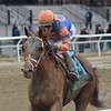 Vino Rosso, John Velazquez, Wood Memorial Stakes presented by NYRA Bets, G2, Aqueduct Racetrack, April 7 2018<br /> Vino Rosso wins the 2018 Wood Memorial