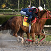 War Story<br /> Gulfstream Park, January 13, 2018<br /> Coglianese Photos/Lauren King