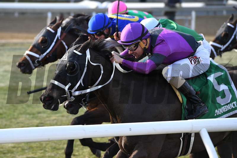 Black Stetson wins the 2018 Bridgetown Stakes<br /> Coglianese Photos/Joe Labozzetta