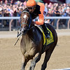 Imperial Hint wins the 2018 Vanderbilt<br /> Coglianese Photos/Joe Labozzetta
