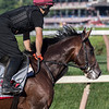 Travers entrant Mendelssohn gets his first gallop over the main track at the historic Saratoga Race Course this morning after arriving from the training stable of Aiden O'brien in Ireland Thursday  Aug. 23, 2018  in Saratoga Springs, N.Y. (Skip Dickstein