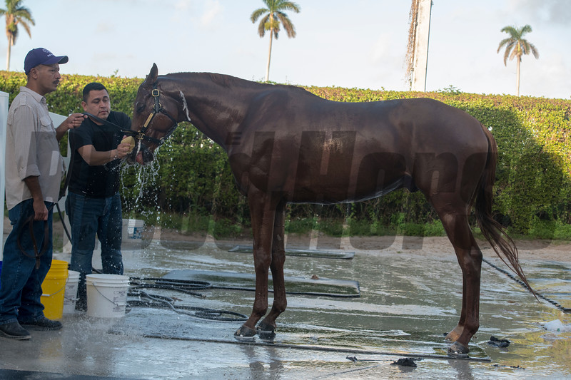 Gun Runner works @ Gulfstream Park Jan 22 2018<br /> © Joe DiOrio/Winningimages.biz