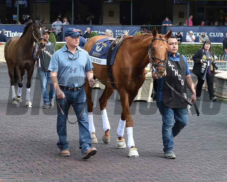 Gun Runner - Gulfstream Park, January 25, 2018<br /> Coglianese Photos/Lauren King