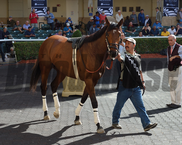 Singing Bullet - Gulfstream Park, January 26, 2018<br /> Coglianese Photos