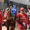 Gunnevera, Dubai World Cup; G1; Meydan Race Course; Dubai, March 31 2018, 8th place