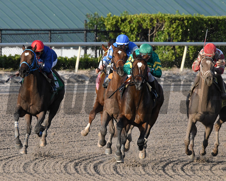 Mask wins the 2018 Mucho Macho Man Stakes<br /> Coglianese Photos/Andie Biancone