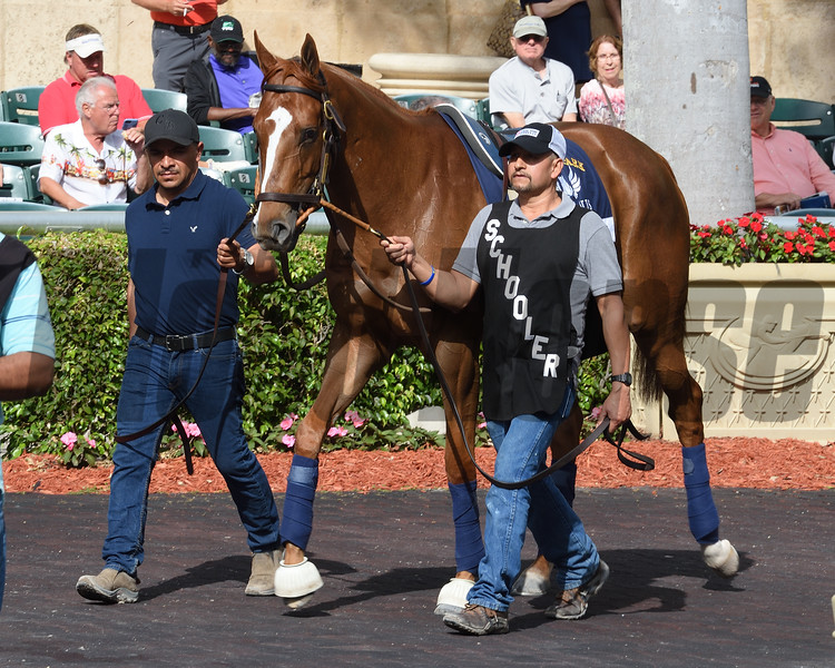 Stellar Wind - Gulfstream Park, January 25, 2018<br /> Coglianese Photos/Leslie Martin
