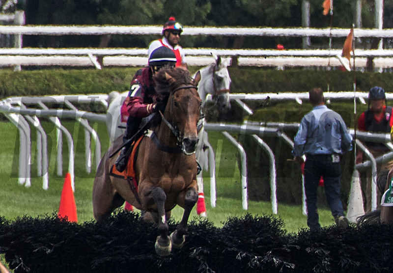 Show Court with Michael Mitchell jumps the first of 8 fences on his way to the win in the A.P. Smithwick at the Saratoga Race Course in Monday July 30, 2018 in Saratoga Springs, N.Y.  Photo by Skip Dickstein