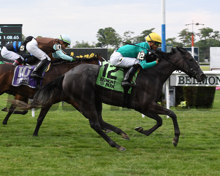 Kreesie wins 2018 New York Stallion Stakes at Belmont Park. Photo: Coglianese Photos/Susie Raisher