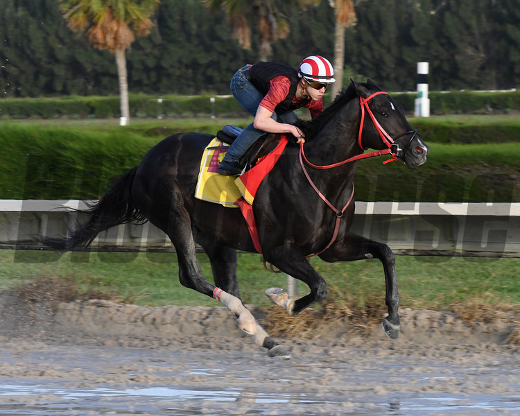 Sharp Azteca<br /> Gulfstream Park, January 13, 2018<br /> Coglianese Photos/Lauren King