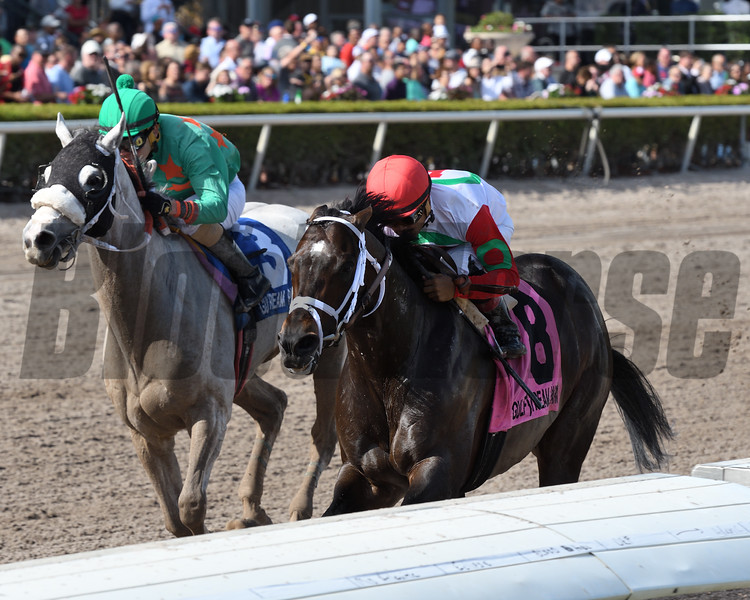 Tommy Macho wins the 2018 Fred W. Hooper Stakes<br /> Coglianese Photos/Annette Jasko