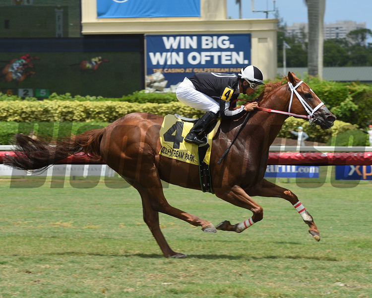 Pay Any Price wins 2018 Crystal River Stakes at Gulfstream Park. Photo: Coglianese Photos/Leslie Martin