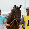 BACKYARD HEAVEN walking up for The Alysheba Stakes at Churchill Downs on May 4th 2018, jockey Irad Ortiz Jr up