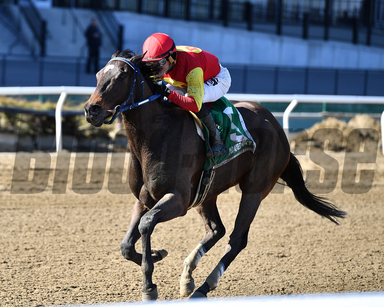 Morning Buzz wins the 2018 Peeping Tom Stakes<br /> Coglianese Photos/Joe Labozzetta