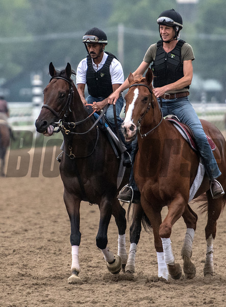Diversify goes out for a long jog and a visit to the starting gate on the main track at the Saratoga Race Course this morning Aug. 3, 2018 in preparation for Saturday's Whitney Stakes in Saratoga Springs, N.Y. Photo by Skip Dickstein