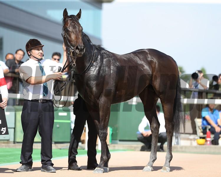 Leyenda, Natsukodachi Sho, Tokyo Racecourse, May 12, 2018