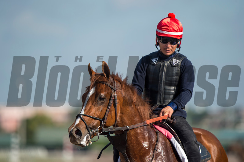 Prommisses Fulfilled  with Juan up @ Gulfstream Park. March 2  2018<br /> © Joe DiOrio/Winningimages.biz