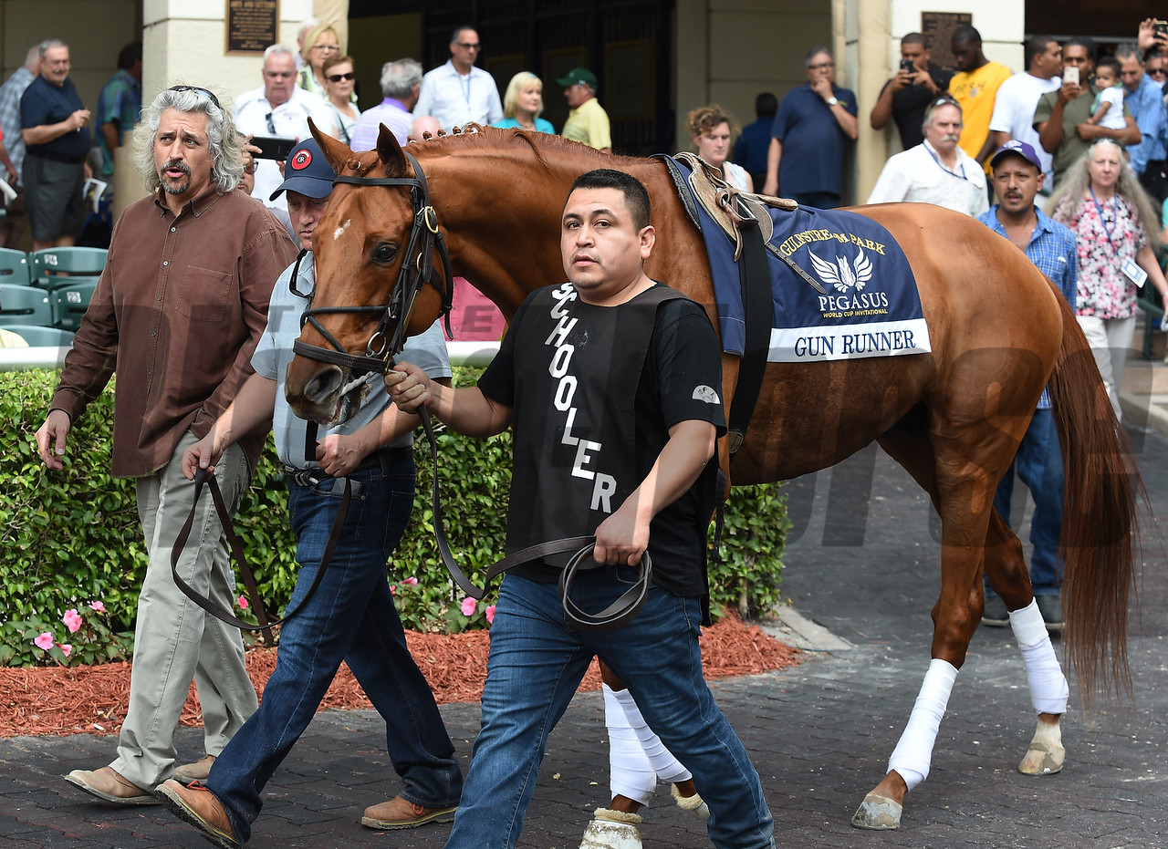 Gun Runner; schooling; Pegasus World Cup; Gulfstream Park; January 24 2018