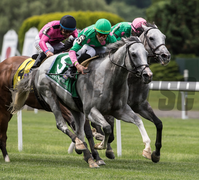 Disco Partner wins the Jaipur Invitational S. (GII) at Belmont Park June 9th 2018, jockey Irad Ortiz Jr up. Photo: Skip Dickstein
