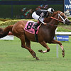 Pay Any Price wins the 2018 Bob Umphrey Turf Sprint<br /> Coglianese Photos/Lauren King