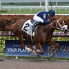 King Humor - Maiden Win Gulfstream Park, February 2, 2018<br /> Coglianese Photos/Lauren King