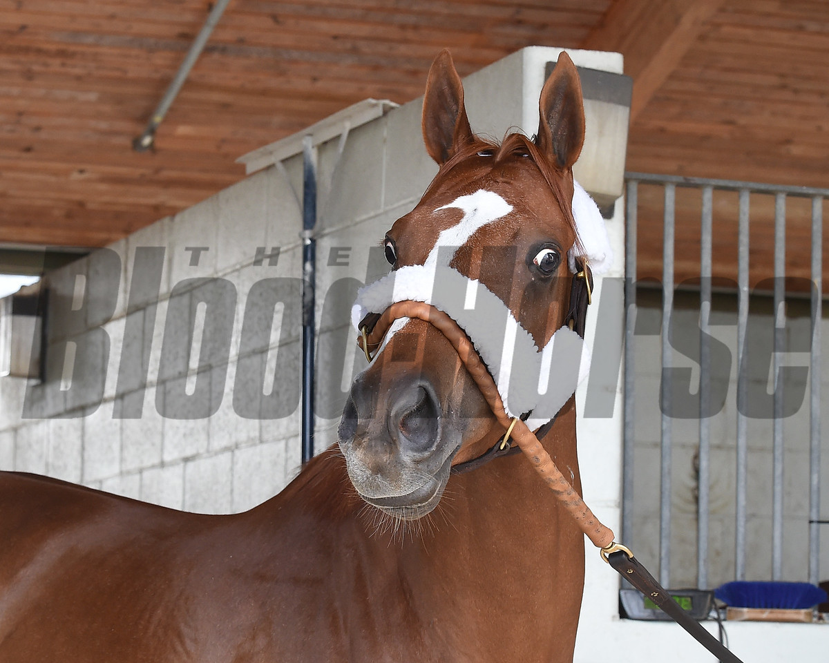 Stellar Wind, arrival; Pegasus World Cup; Gulfstream Park; January 23 2018