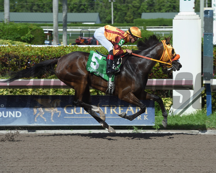 Curlin's Approval wins 2018 Ana T. Stakes at Gulfstream Park. Photo: Coglianese Photo/Leslie Martin