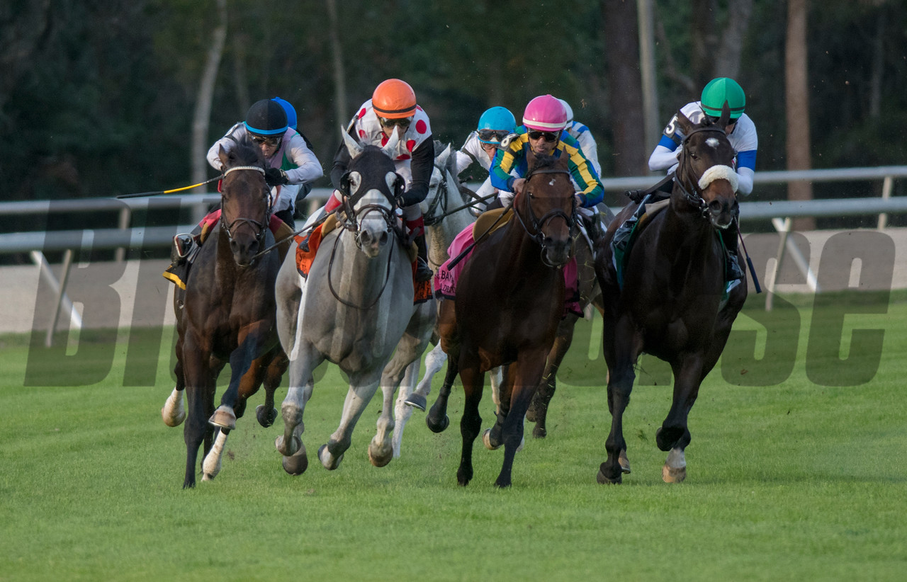World Approval. with Jonny Velazquez up wins The Tampa Bay Stakes  @ Tampa Bay Downs. <br /> © Joe DiOrio/Winningimages.biz