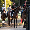 Travers entrant Mendelssohn gets his first look at the historic Saratoga Race Course this morning after arriving from the training stable of Aiden O'brien in Ireland Thursday  Aug. 23, 2018  in Saratoga Springs, N.Y. (Skip Dickstein/