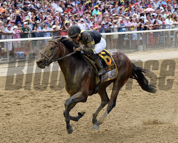 Still Having Fun wins 2018 Woody Stephens Stakes at Belmont Park June 9, 2018. Photo: Coglianese Photos/Chelsea Durand