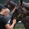 Casse Racing Stable worker Samantha Bussanich holds Travers Stakes entrant Wonder Gadot as trainer Mark Casse gives her a pat on the head after her final breeze before next Saturday's race Friday Aug. 17, 2018 at the Saratoga Race Course in Saratoga Springs, N.Y.  (Skip Dickstein