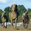 Eskimo Kisses wins the Alabama Stakes at Saratoga Saturday, August 18, 2018. Photo: Coglianese Photos