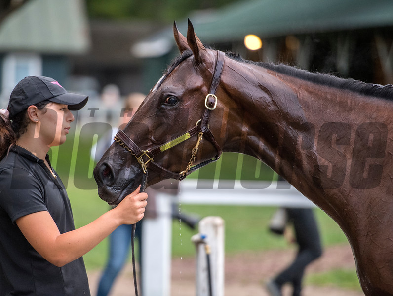 Casse Racing Stable worker Samantha Bussanich holds Travers Stakes entrant Wonder Gadot during her bath after her final breeze before next Saturday's race Friday Aug. 17, 2018 at the Saratoga Race Course in Saratoga Springs, N.Y.  (Skip Dickstein/